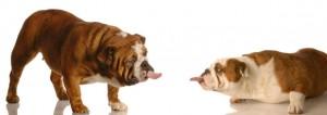 tresowanie-psow