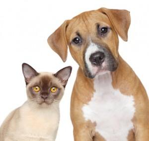 Bezpieczny pies i kot w domu