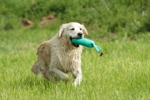 Zabawka dla psa aport Sport Dog